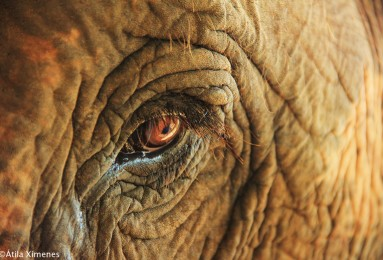 elefante-chiang-mai